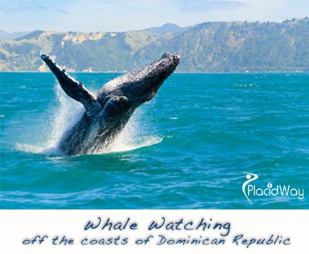 Whale Watching Health Travel Dominican Republic