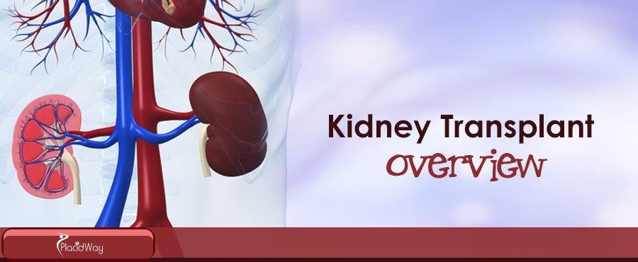 Kidney Transplant Treatment Procedure