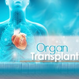 What-Are-Organ-Transplant-Donor-Requirements-in-Turkey